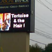 Tortoise and Hair